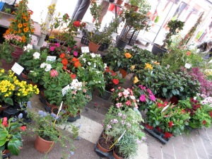 Part of the beautifully arranged flower market section