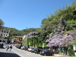 The bus returns to SML from a square above the harbour - complete with this magnificent wisteria