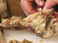 man's hand pulling meat apart
