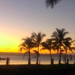 tropical sunset with palm trees and water