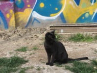 Black cat in the Galata District of Istanbul