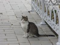 Cat in Sultanahmet, Istanbul