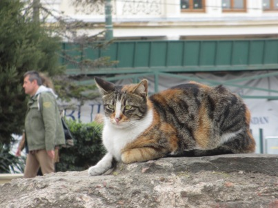 Tabby cat on a rock Istanbul