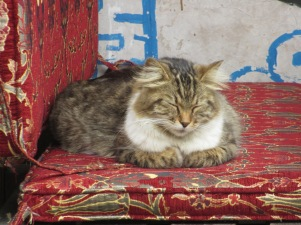 Tabby cat sitting on a cushion in Sultanahmet, Istanbul