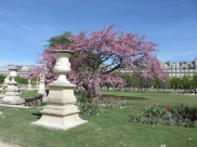 urn on a plinth with blossom tree in the Tuileries