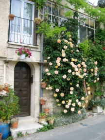 white climbing rose at a doorway