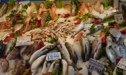 fish stall in the Athens fish market