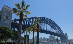 Sydney Harbour bridge and palm tree viewed from the Hyatt Hotel