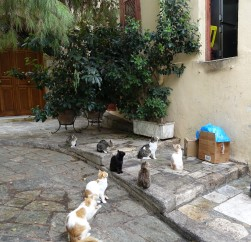 Cats sitting at the backdoor of a restaurant in Athens
