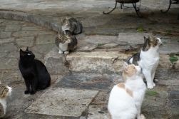 Cats sitting in Anofiotika Athens, Greece