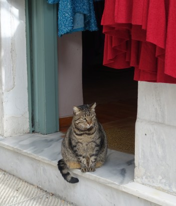 Tabby cat sitting on a marble door step in Athens