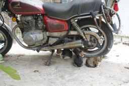 Three kittens hiding under a motorbike in Athens, Greece