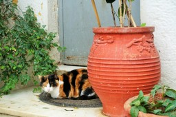 Tortoise shell calico cat sitting on a doormat in Athens, Greece