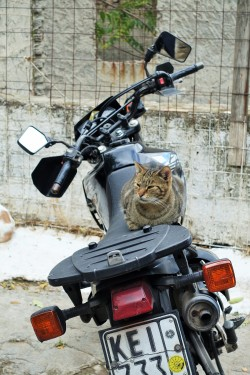 Tabby cat sitting on a motorcycle in Anofiotika Athens Greece
